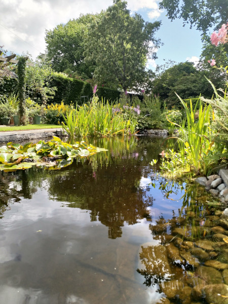 view of the pond at The Old Vicarage Llandysul